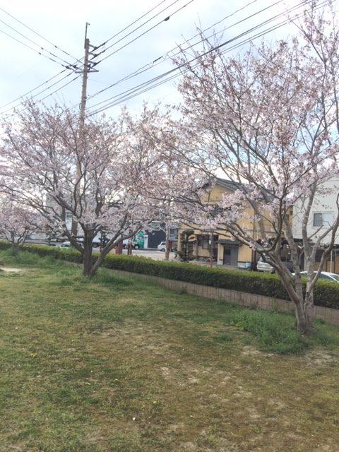 桜のシーズンがやってきましたね