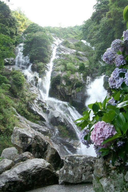 見帰りの滝(みかえりのたき)と紫陽花